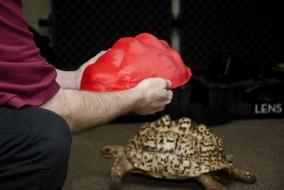 turtle2lr