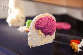 3d printen hersenen